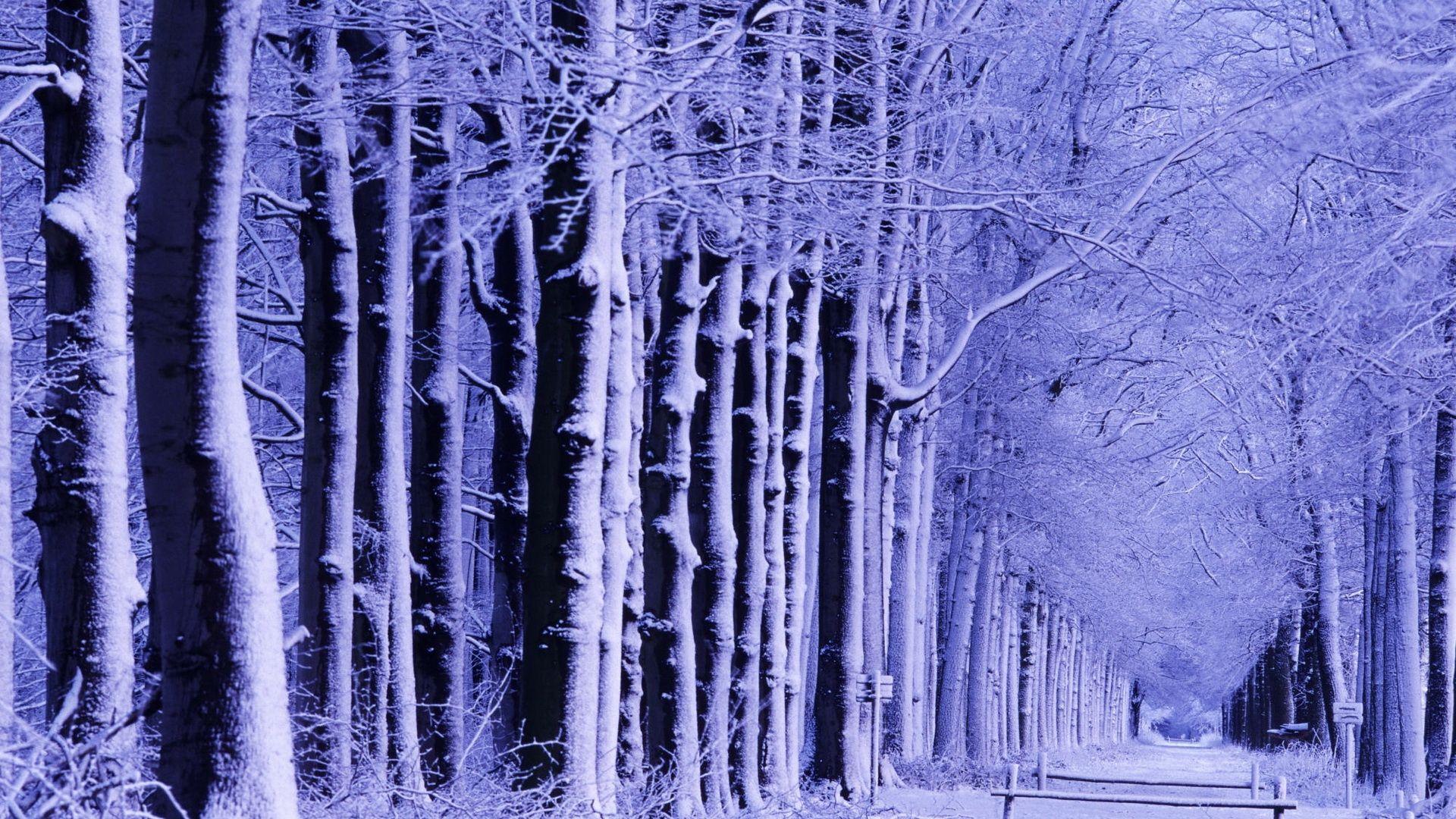 Download Wallpaper 1920x1080 Winter Park Shop Trees Snow Hoarfrost Full Hd 1080p Hd Background Fantasi