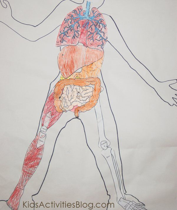 Human Body System Learn About It Human Body Systems Body