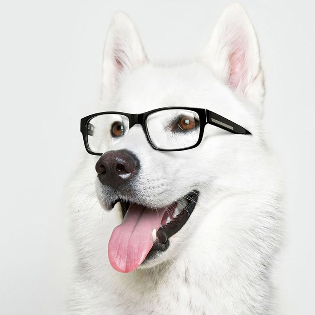 Smart Dog Smart Dog Funny Dogs Smiling Dogs