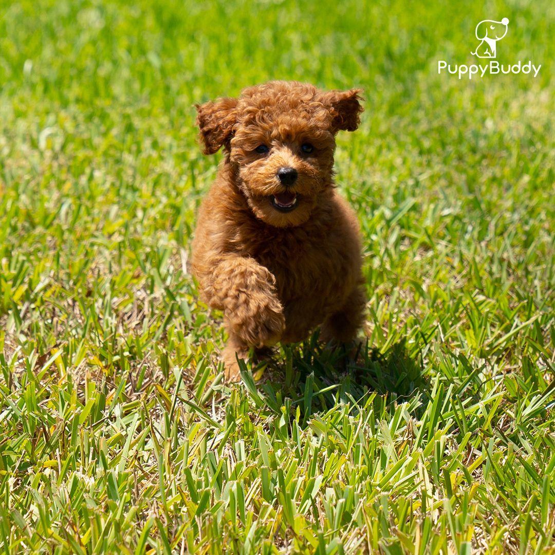 Did Someone Say Treats Puppybuddy Puppy