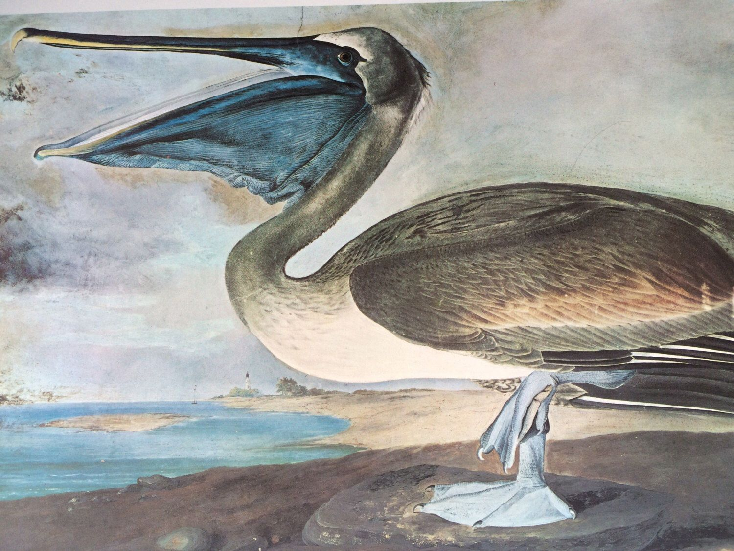 1966 White Heron Xl Print By Audubon John James Audubon Bird
