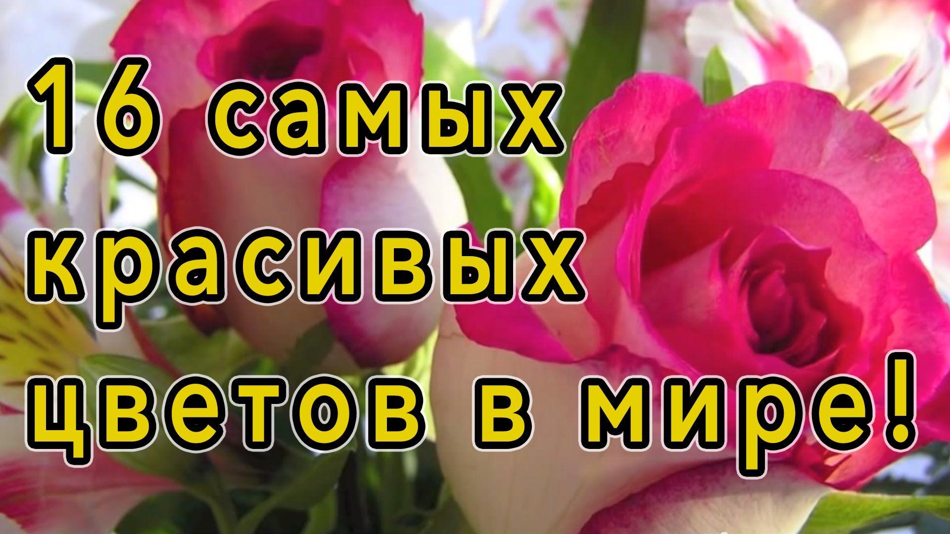 Samye Krasivye Cvety V Mire Flowers