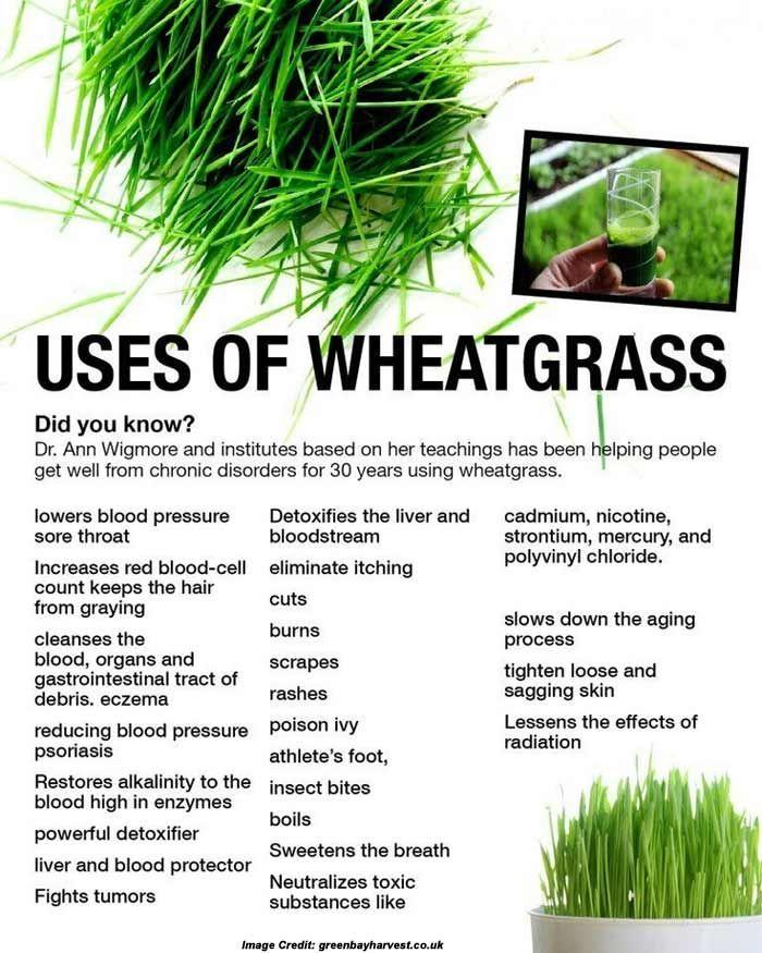 10 Amazing Benefits of Wheatgrass