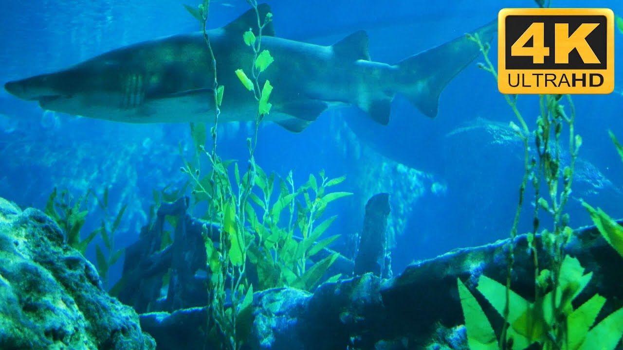 Shark Tank In 4k Shark Aquarium Screensaver In 2019