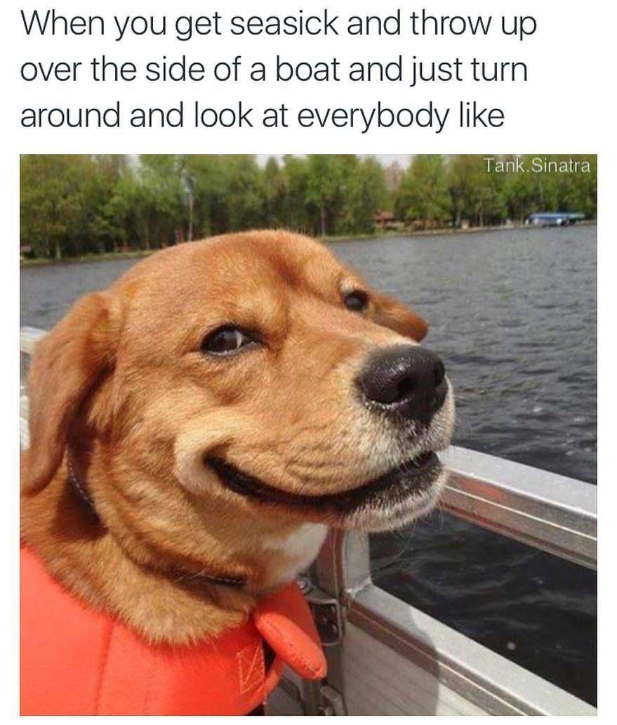 25 Lit Memes Of September Funny Funnymemes Memes Lol Humor Viralmemes Sarcasm Haha Rofl Lmao Smiling Dogs Dog With Eyebrows Funny Dog Photos