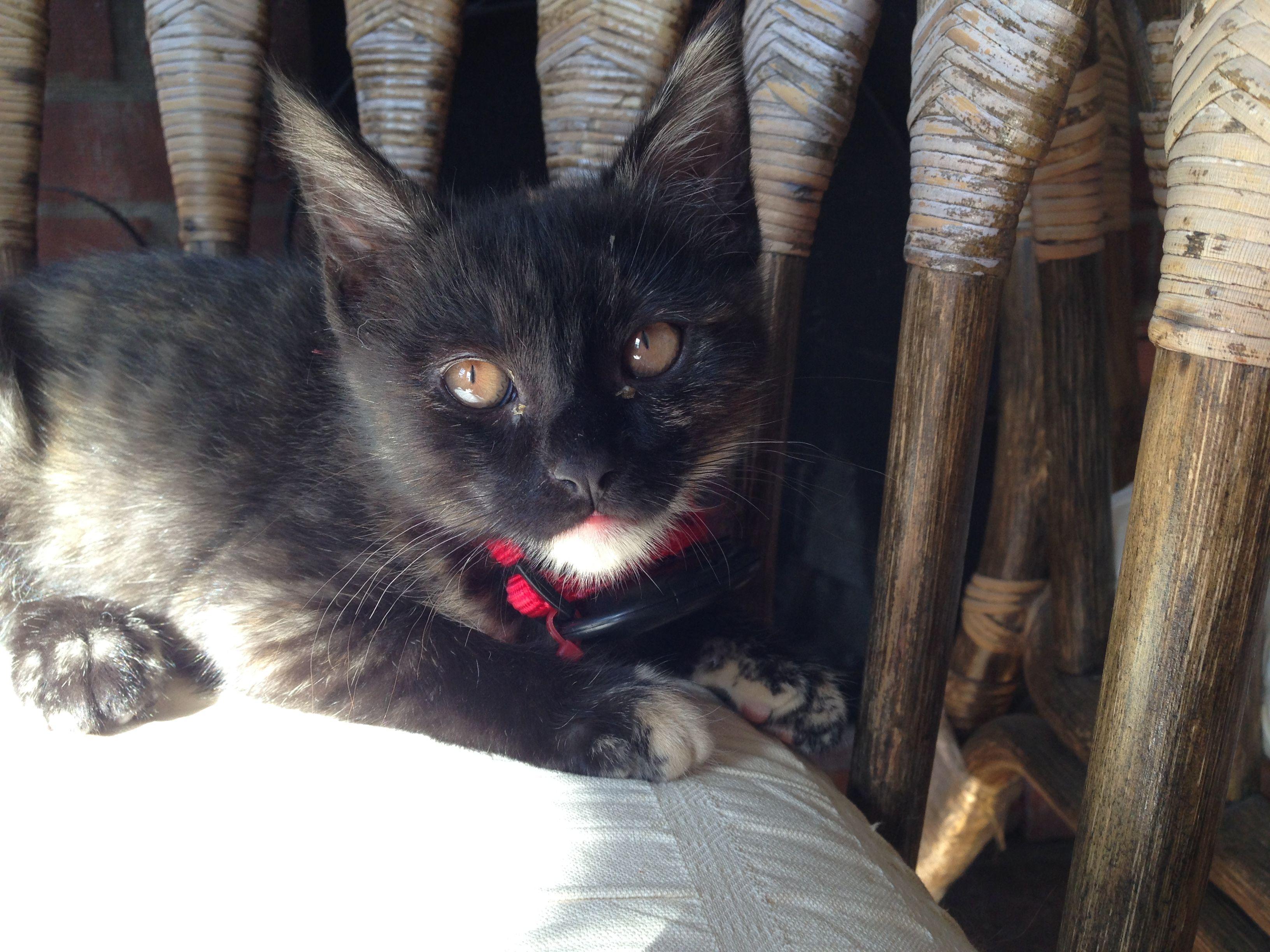 Mia #kitten #cat