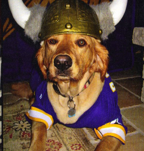 separation shoes d9ec6 0c241 Vikings Dog - he's going all out for game day! #purplepups ...