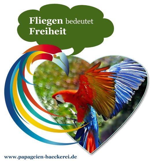Fliegen bedeutet Freiheit