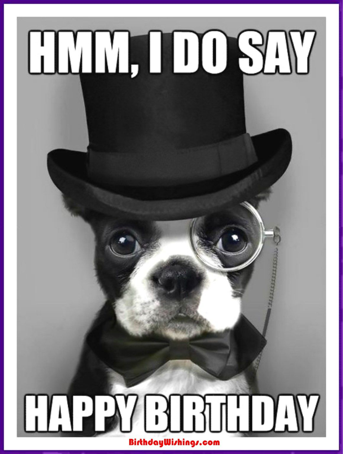 Funny Happy Birthday Memes With Cats Dogs Funny Animals Dapper Dogs Animals Boston Terrier