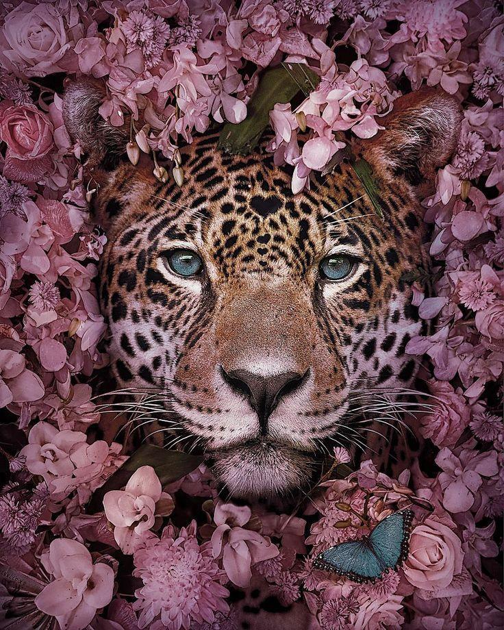 #Andreas #animal #Awareness #Endang #Häggkvist #Portraits #Raise