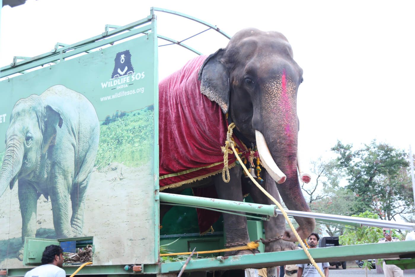 freeed elphant behind 50 years