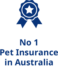 Good Breed Info Breed Selector Pet Insurance Winner Best Pet