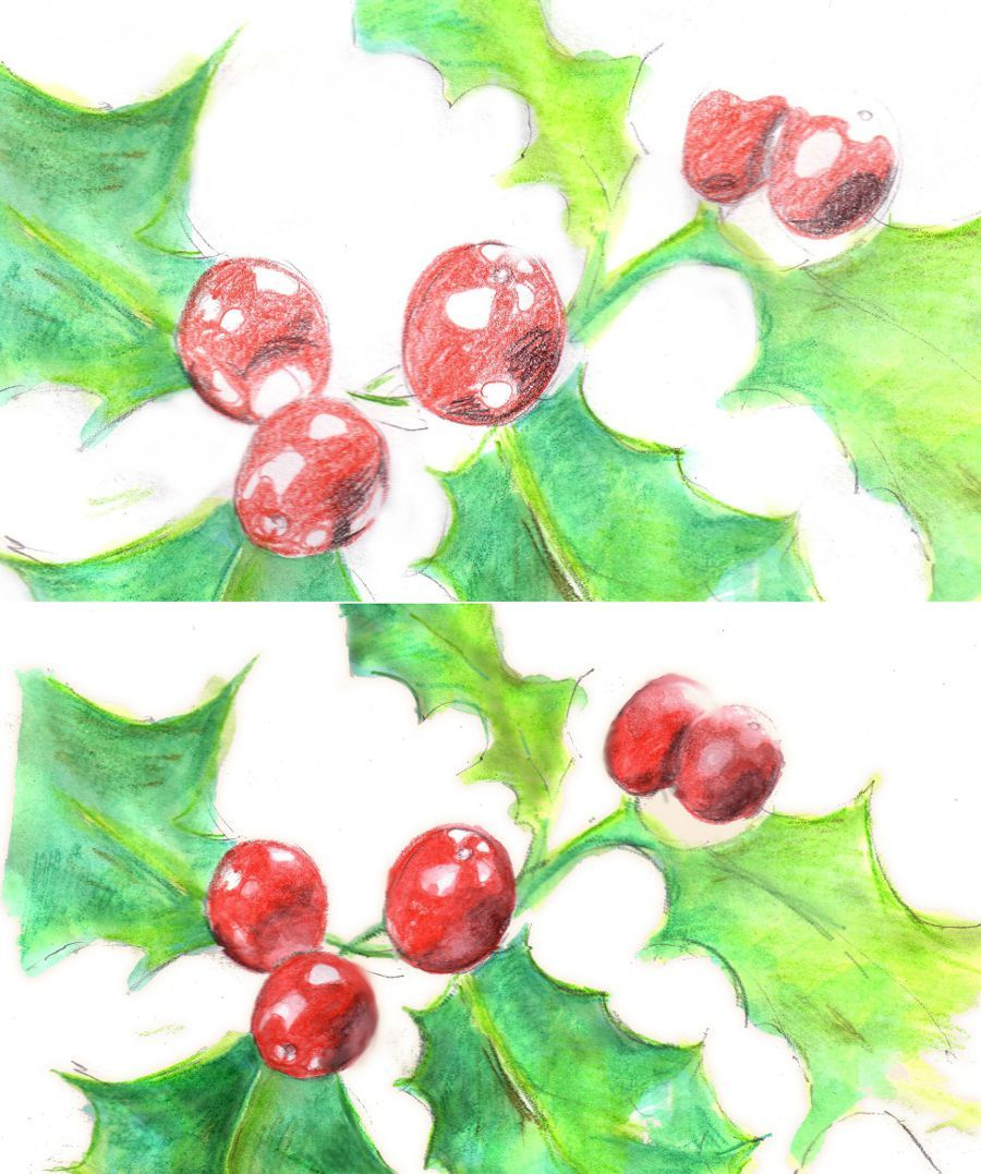 Learn To Draw A Holly Plant For Christmas (With Images