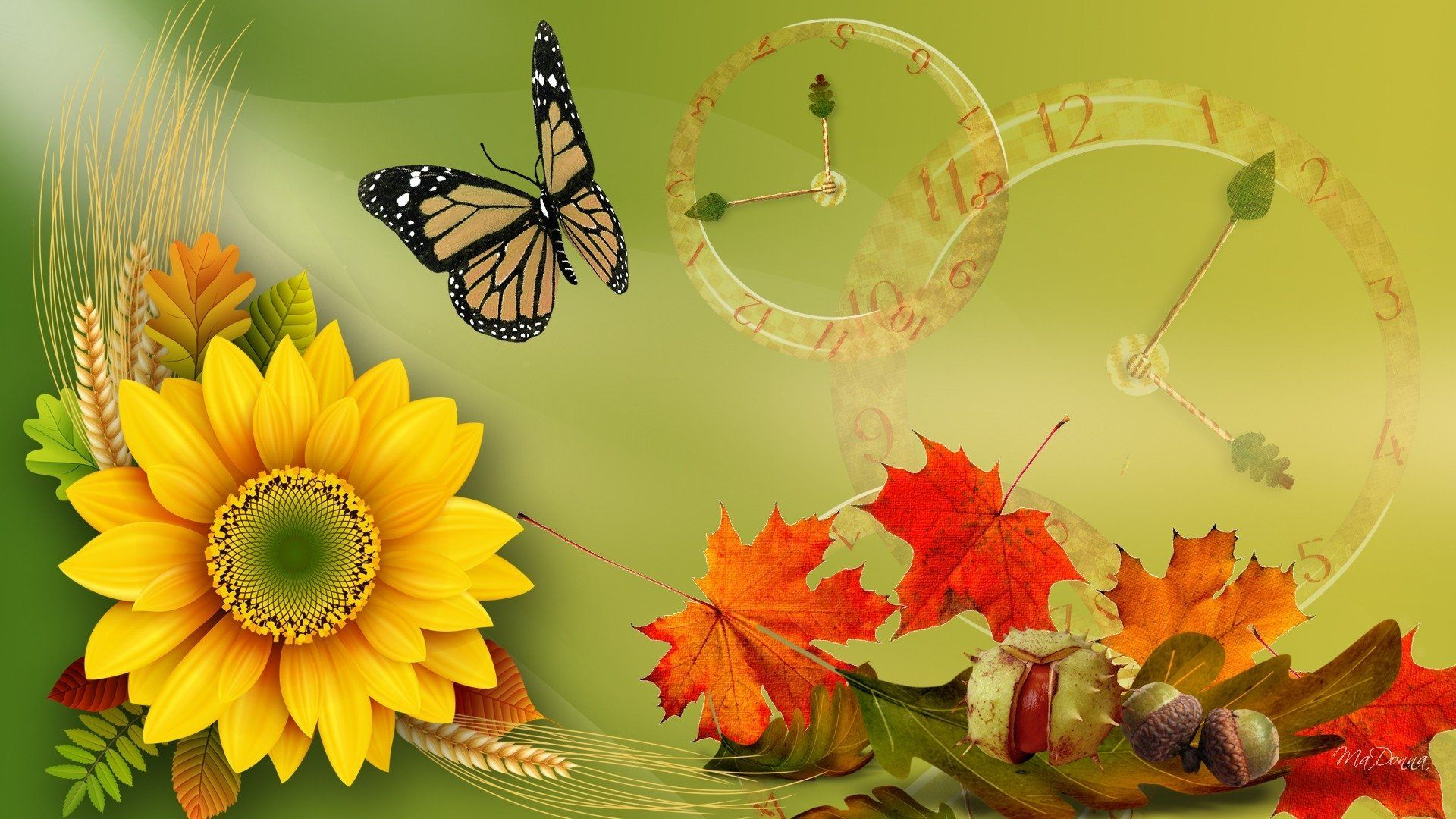 sunflower live wallpapers android apps on google play