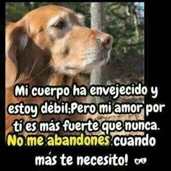 Insertado Perros Enfermos Amantes De Perros Perros Frases