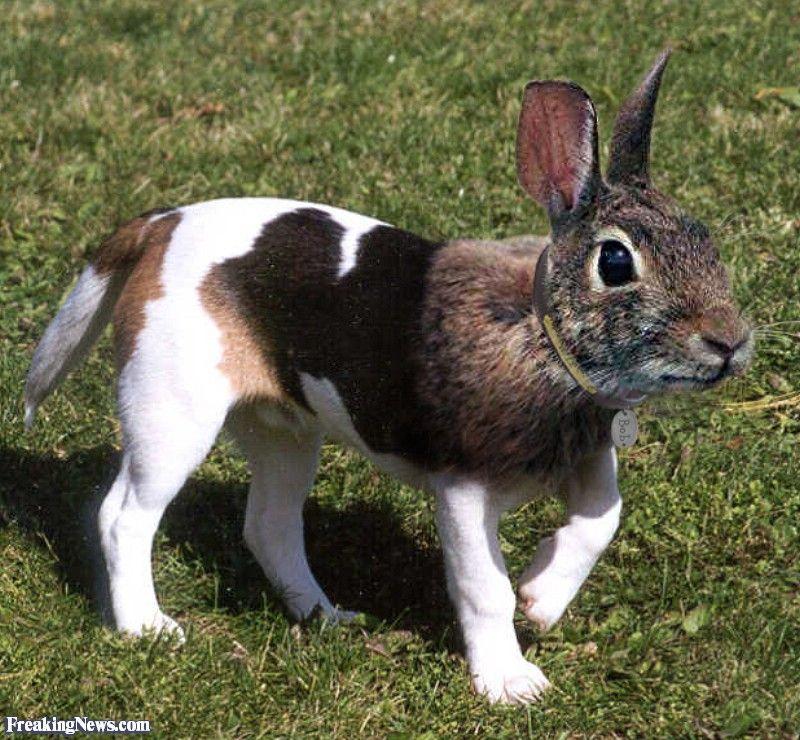 Rabbitdog hybrid animals, Animal mashups