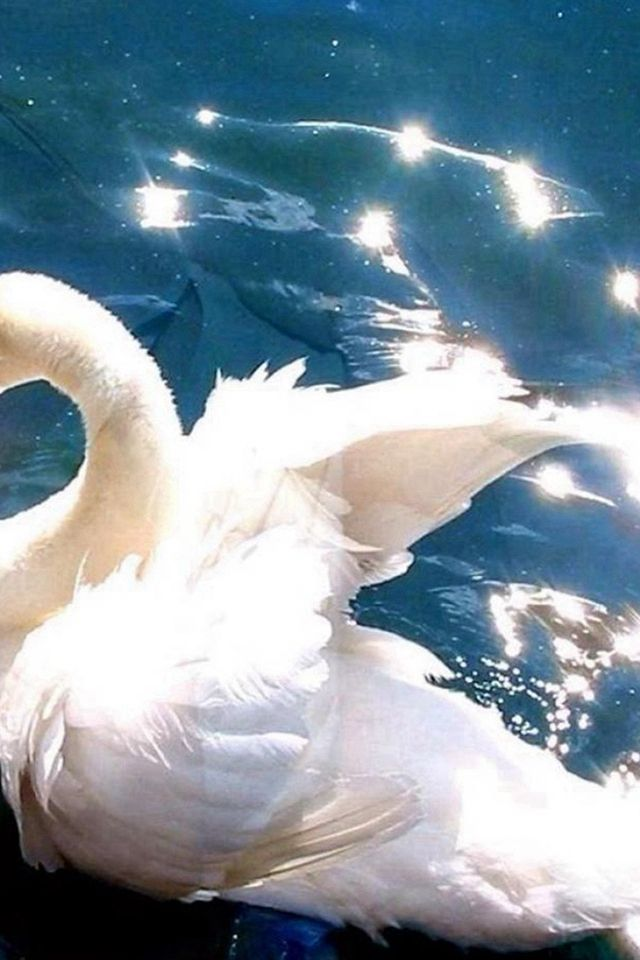 Clear Pool Water Wallpaper bright white swan swimming clear pool #iphone #4s #wallpaper