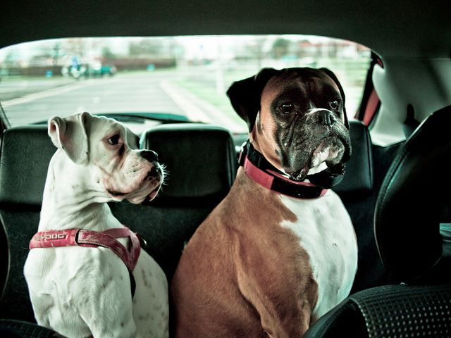 Are we there yet? (268/365) by andy-harris, via Flickr