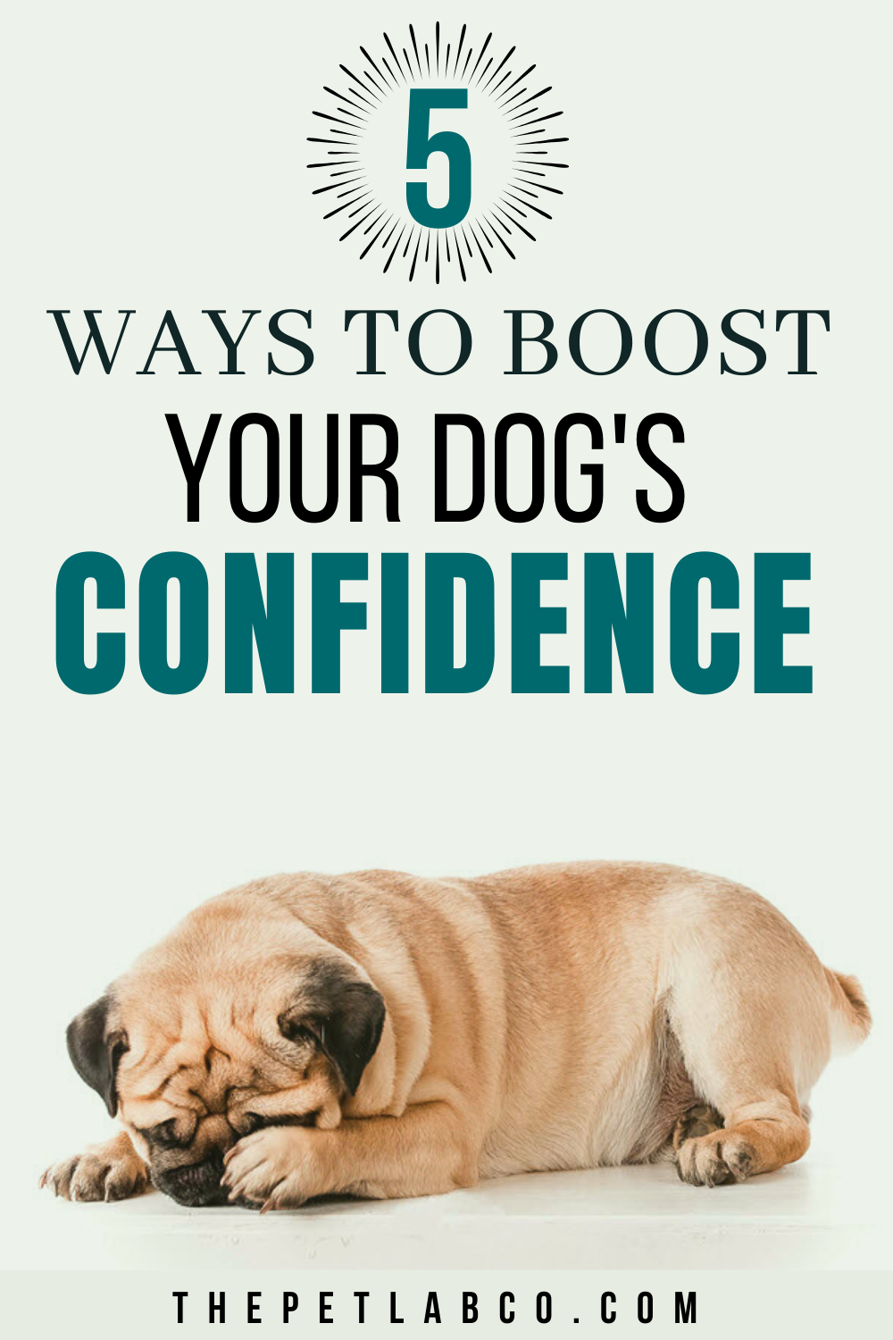 Nervous Dog Here Are 5 Ways To Build Confidence In Your Pet Dogs Pet Sitters International Cute Dog Collars
