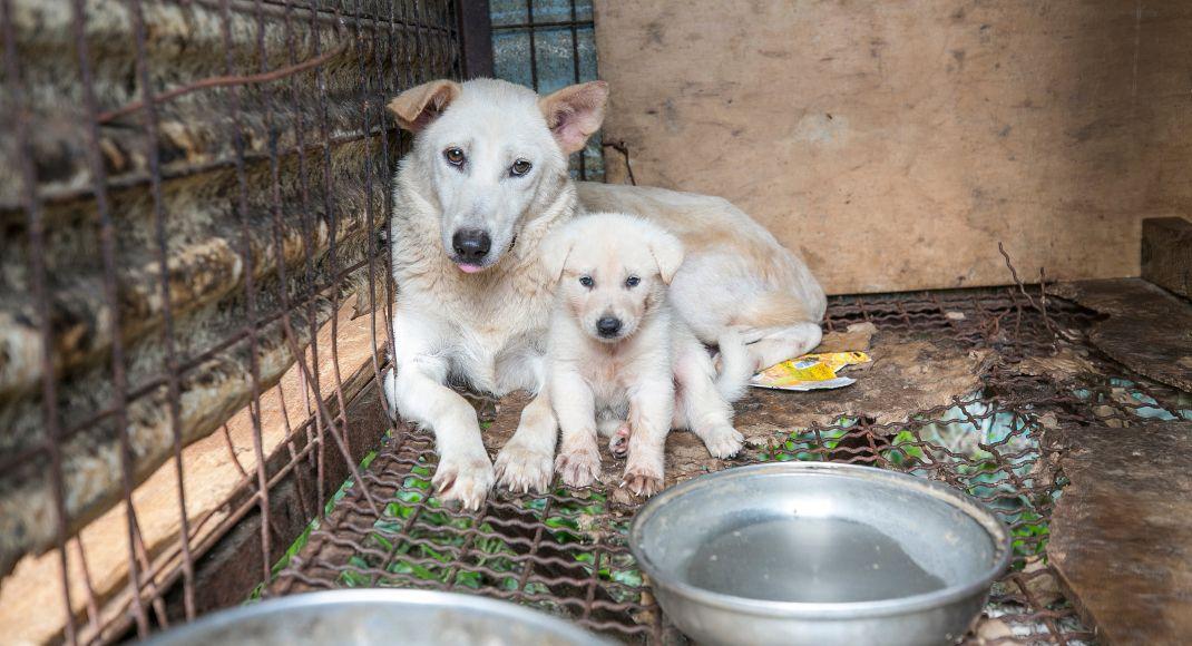 Stop The Cruel Dog Meat Trade Humane Society International Street Dogs Humane Society Dogs