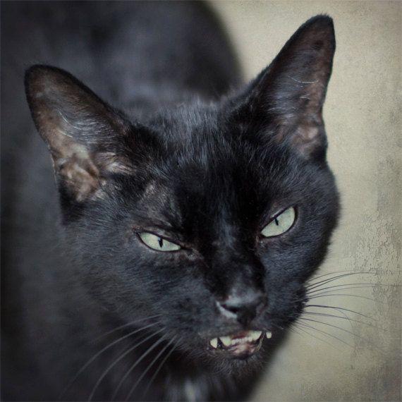 Black Cat Halloween Photo Spooky Feline Creepy Cat Teal Green Eyes Gothic Goth Scary Cat Olive Beige Halloween Ph Creepy Cat Scary Cat Black Cat Halloween