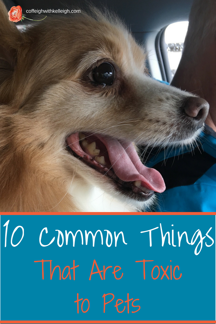 10 Common Things That Are Toxic To Pets With Images Pets Pet Hacks Dog Photos