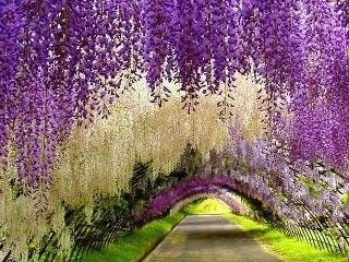 Wisteria to extreme!!#Pin By:Pinterest++ for iPad#