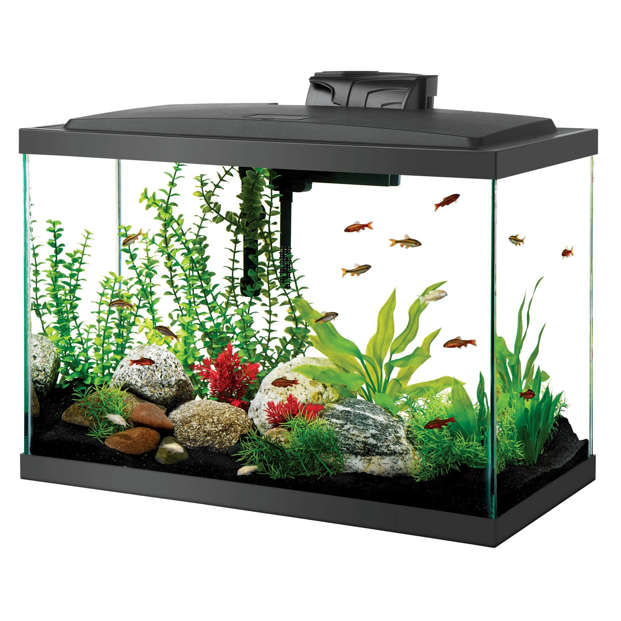 Aqueon LED Aquarium Kit 20 Gallon Tall Black in 2019