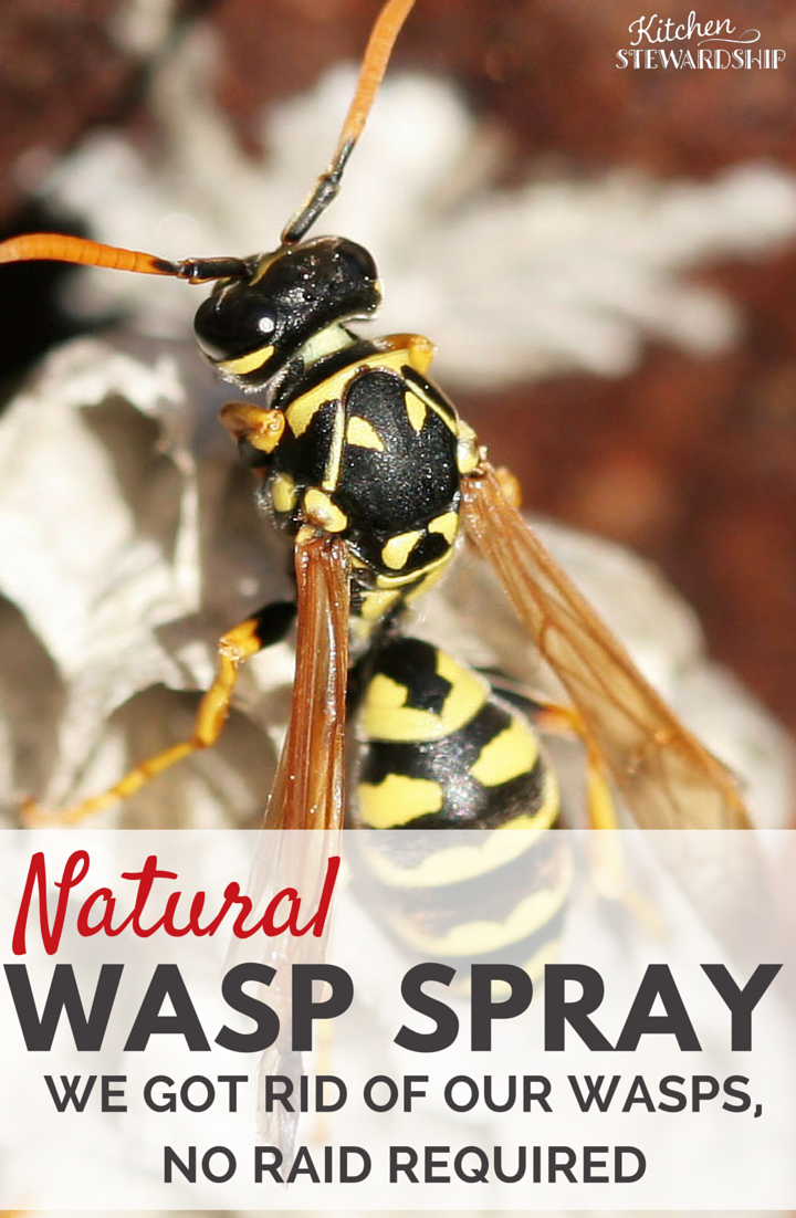 Lovely Natural Wasp Killer   Get Rid Of Wasp Nests Without Chemicals