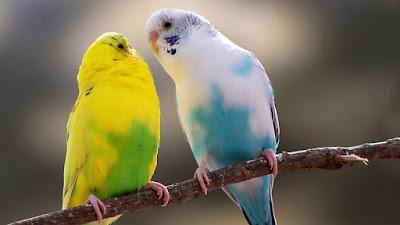 اجمل صور الطيور In 2021 Parrot Parakeet Australian Parrots