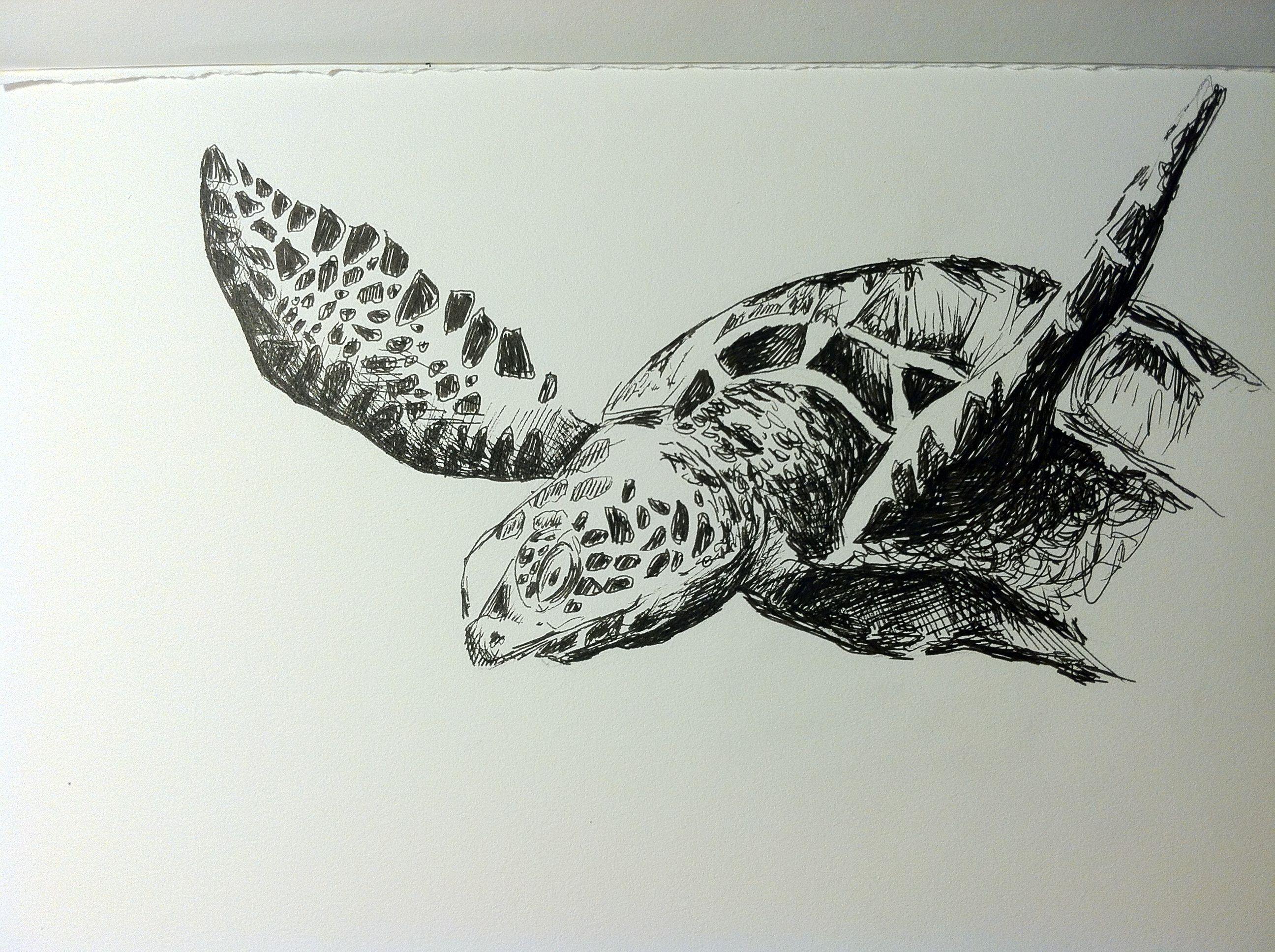 Turtle Line Drawing Tattoo : Sea turtle sketch in ink art pinterest