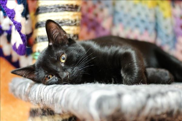 Will You Help Me Find My Furever Home For The Holidays I M Just 50 To Adopt This Weekend Only Simon Here I M A Sweet Little Little Kittens Adoption Kittens