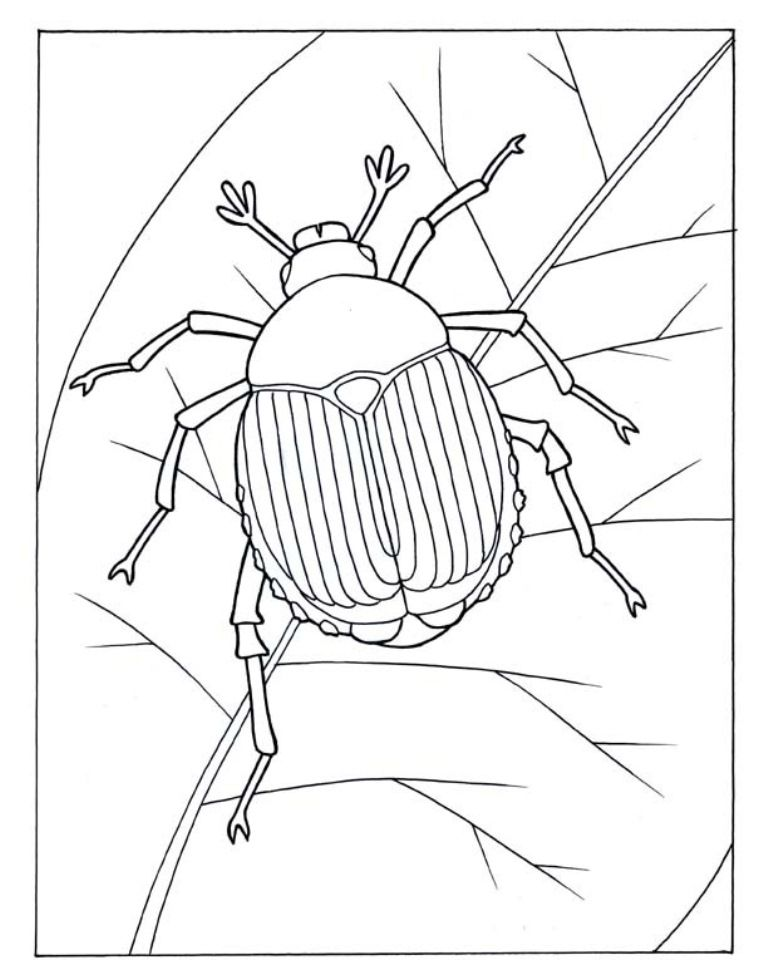 Awesome Beetle Coloring Pages, Insects Coloring Pages.