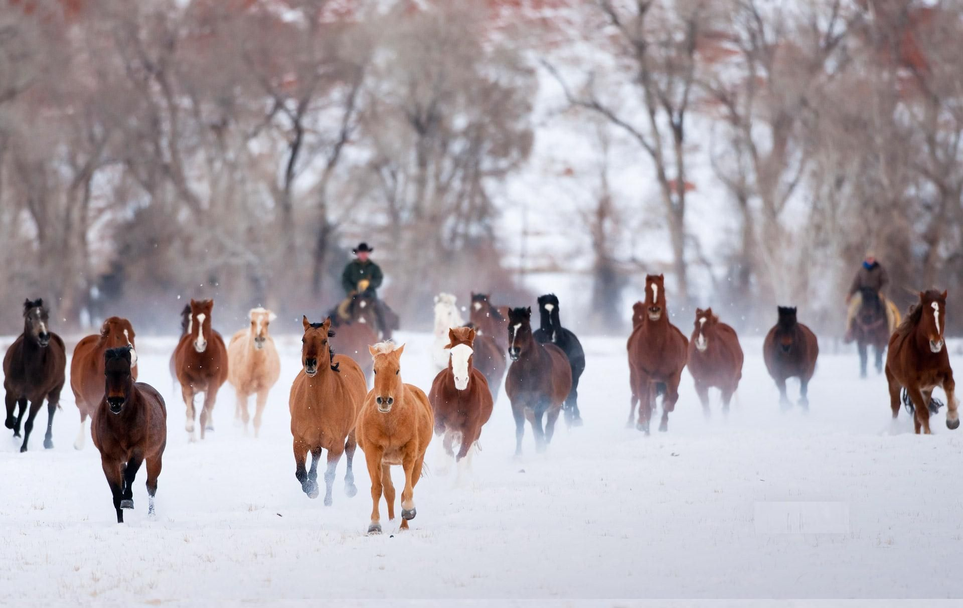 Top Wallpaper Horse Winter - 6e5faf735af5400e85da890ebf6cfa13  Graphic_394274.jpg