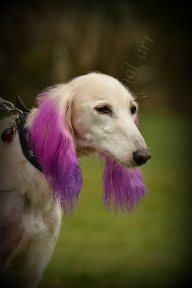 opawz dog hair dye-permanent color