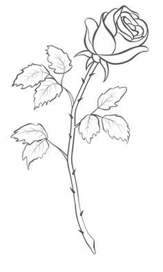 Rose Drawing Outline   Roses drawing, Rose outline drawing, Flower drawing