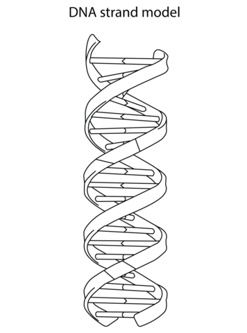 Dna Strand Model Coloring Page Free Printable Coloring Pages Dna Art Dna Tattoo Dna Drawing