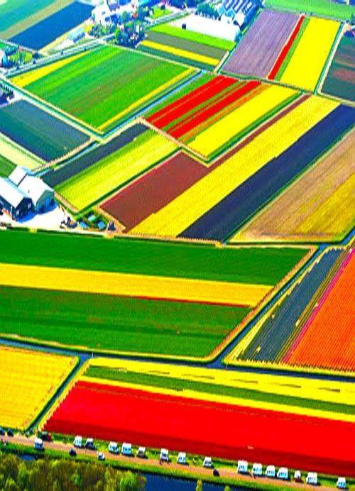 Tulip Fields, Lisse, The Netherlands…Looking for books about #dutchdesign architecture nature culture? Visit shop.holland.com/en