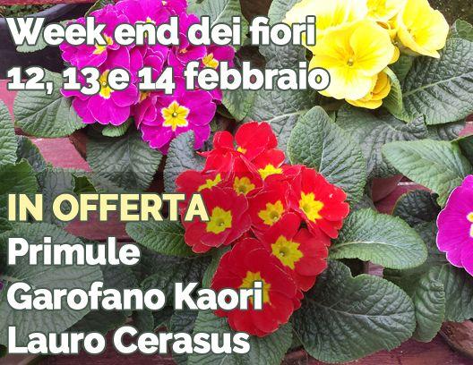 Fiori Kaori.Week Dei Fiori Inizia Per Questo S Valentino Venerdi Sabato E