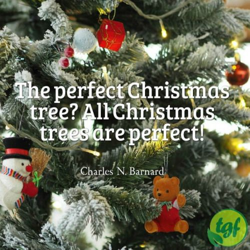 The Perfect Christmas Tree All Christmas Trees Are Perfect Christmas Tree Garden Quotes Tree