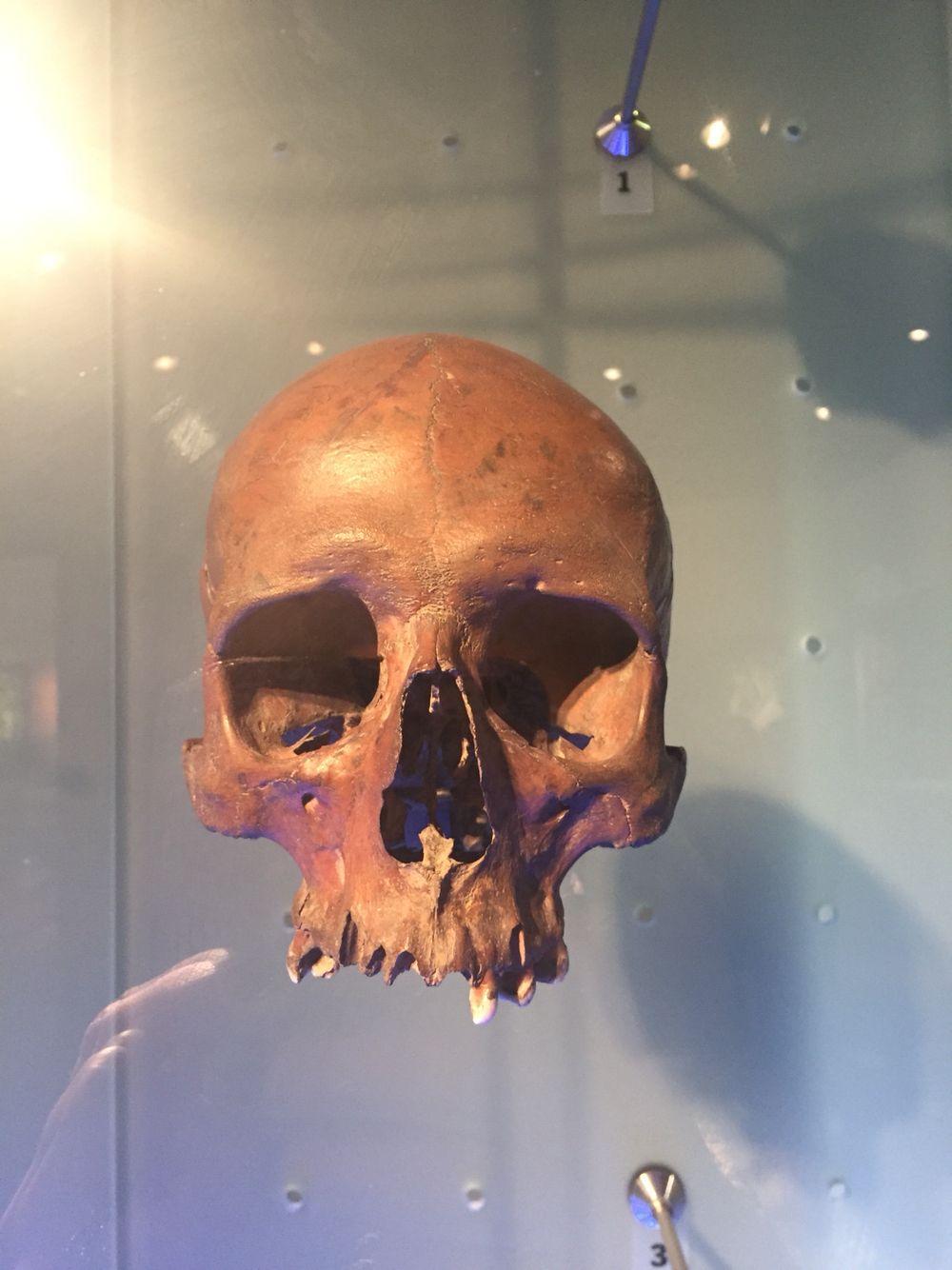 Museum of London Skull