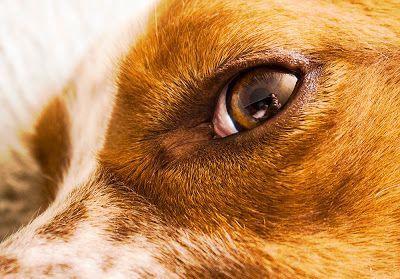 Oriol Bargalló: Autorretrato sobre ojo de perro