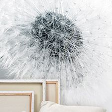 fototapete pusteblume ideen pinterest fototapete pusteblume fototapete und pusteblume. Black Bedroom Furniture Sets. Home Design Ideas