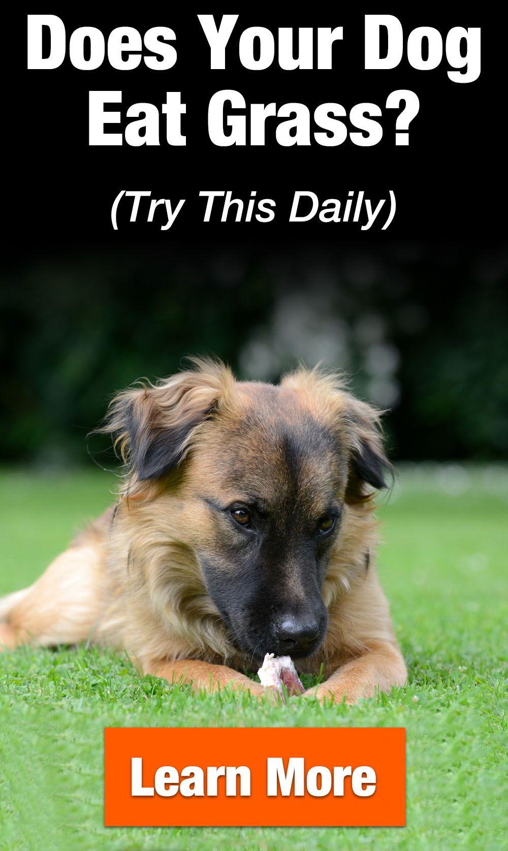 Vetriscience Renal Essentials Feline Supplement For Pets Check