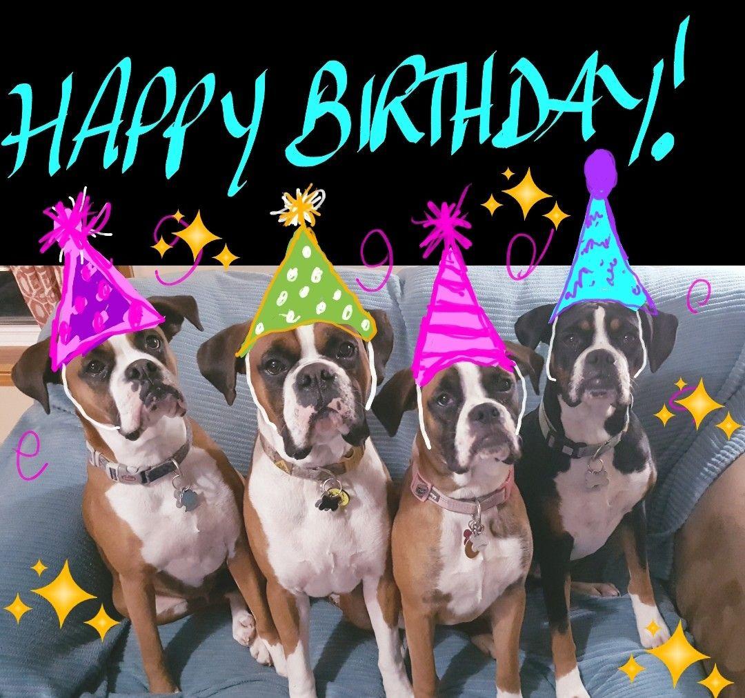 Birthday Boxers With Images Happy Birthday Dog Dog Birthday