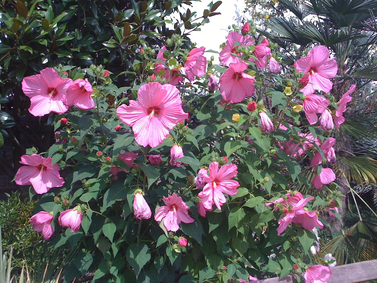 Pin by kathy bacon on roses 6 pinterest explore plant care gardening tips and more izmirmasajfo