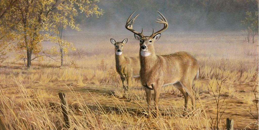Deer scene images buck and doe mural can be decorated to for Deer mural wallpaper