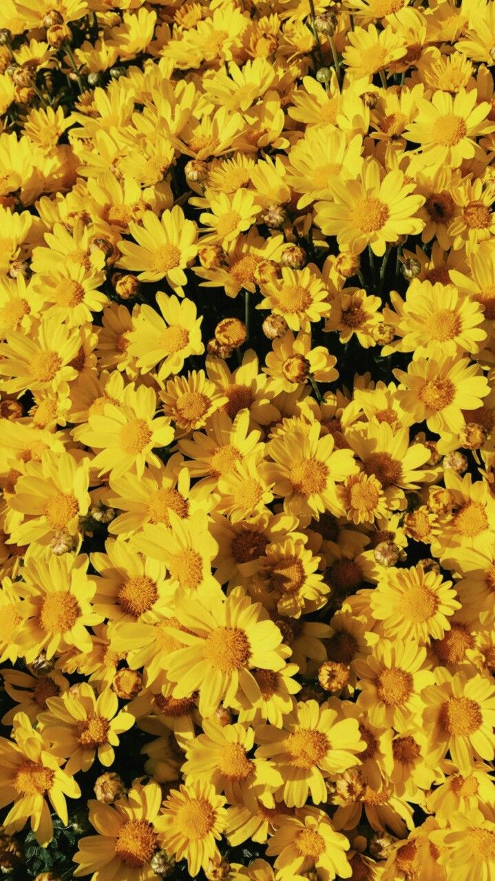 pin by sofie mendes on flowers yellow aesthetic