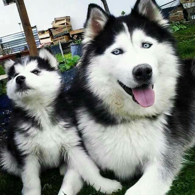 So Cute Cute Dogs Cute Animals Beautiful Dogs