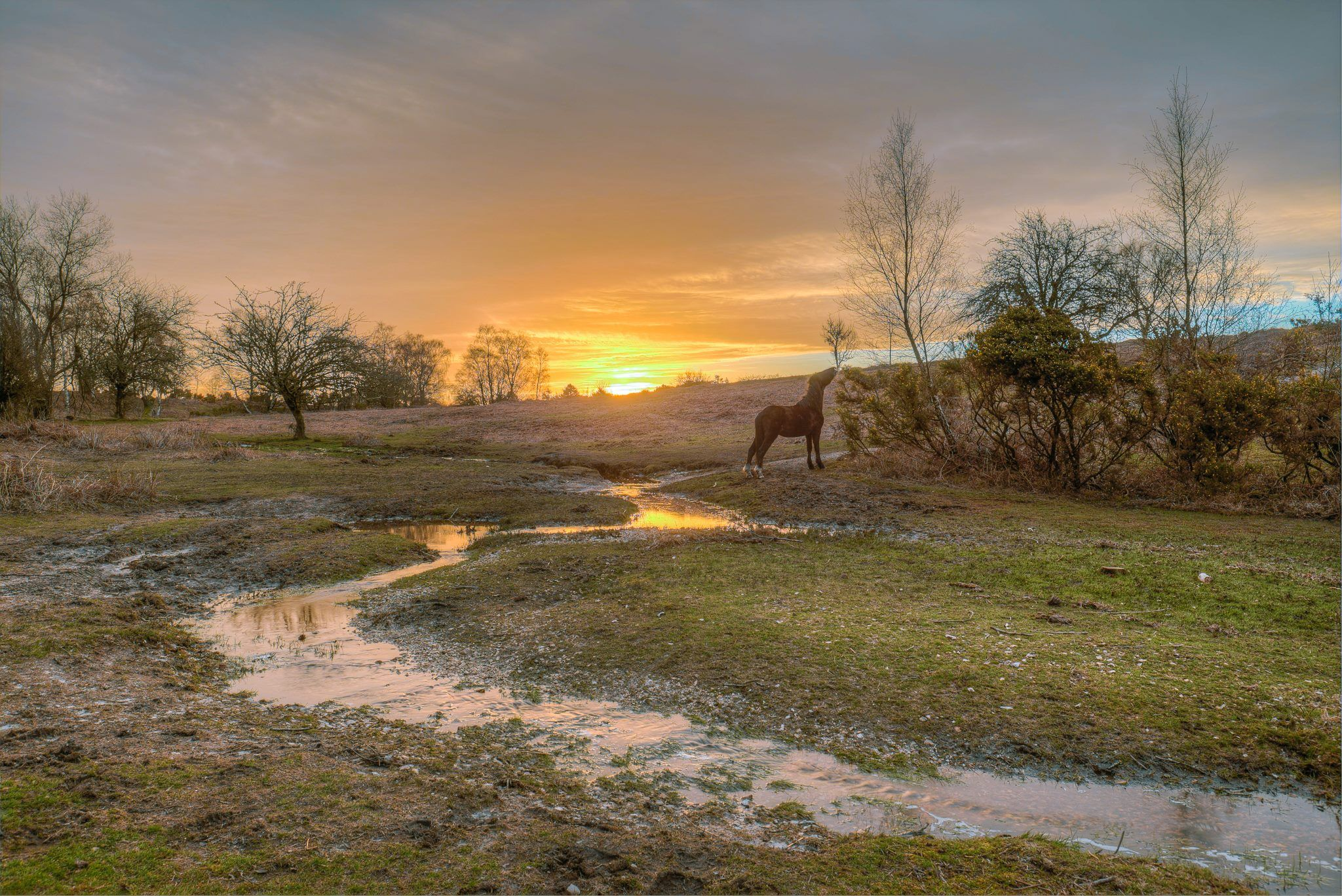 New Forest morning